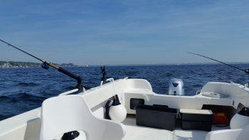 Din Fiskeguide - Øresund Hornfisk